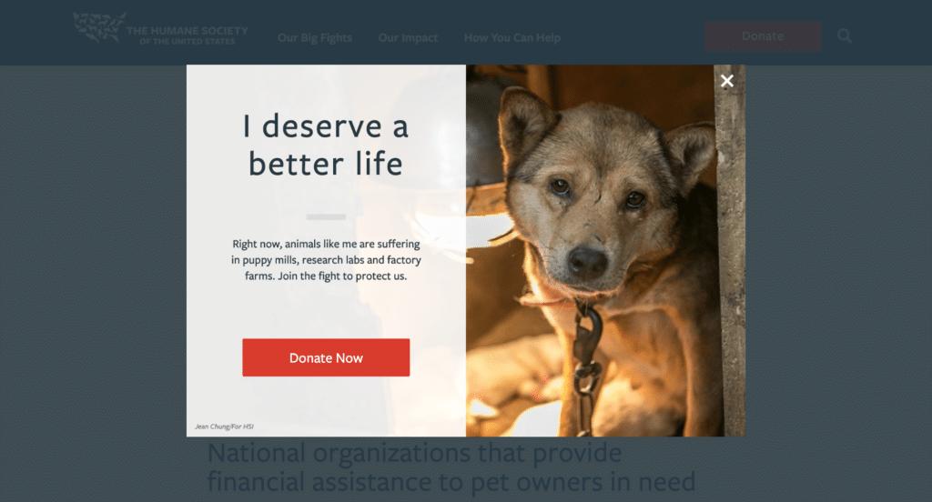 nonprofit website design lightbox popup